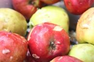 Fallobst für den Apfelsaft