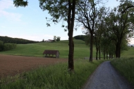 Spaziergang Piber - Foto: Thomas Burchhart