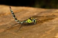 wunderschöne-libelle-von-vorne-seite-900x600