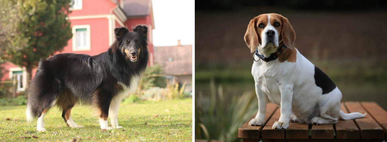 Urlaub mit Hund Cora im Garten, Dippy bei Teich