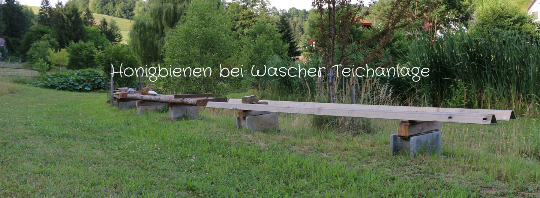 Bienen zu Gast bei Teichanlage