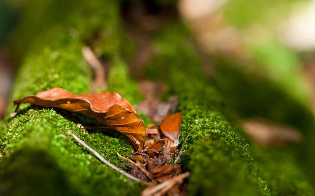 Herbst Ansichten - Foto Thomas Burchhart