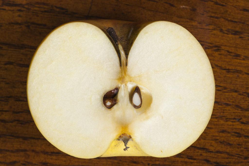 Längsschnitt durch den Apfel - Foto Thomas Burchhart