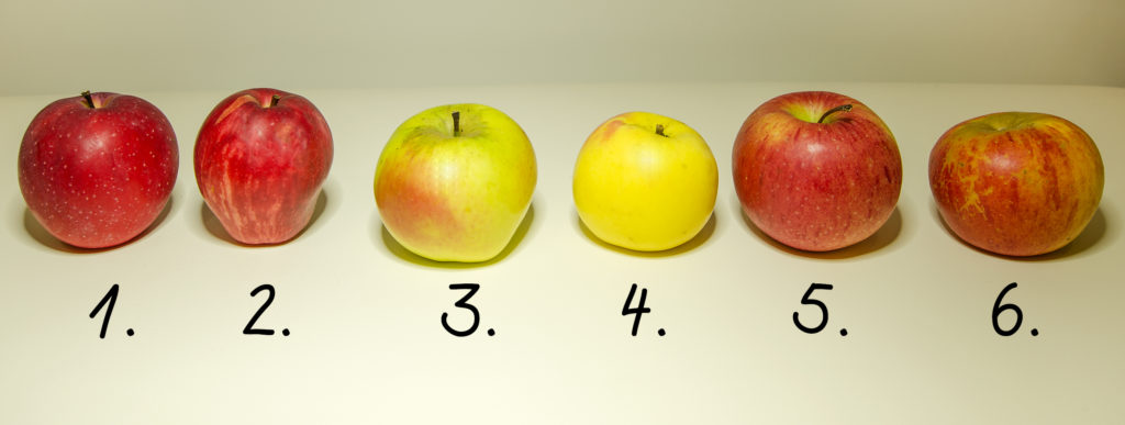 Übersicht typisch steirischer Apfelsorten - Foto Josef Gallaun