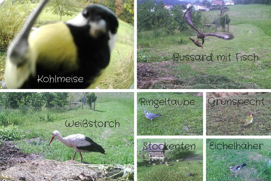 Vögel bei der unserer Teichanlage - Fotos Alois Wascher