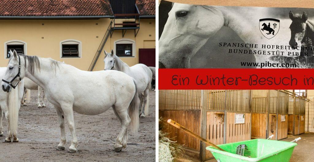 Ein Winter Besuch in Piber