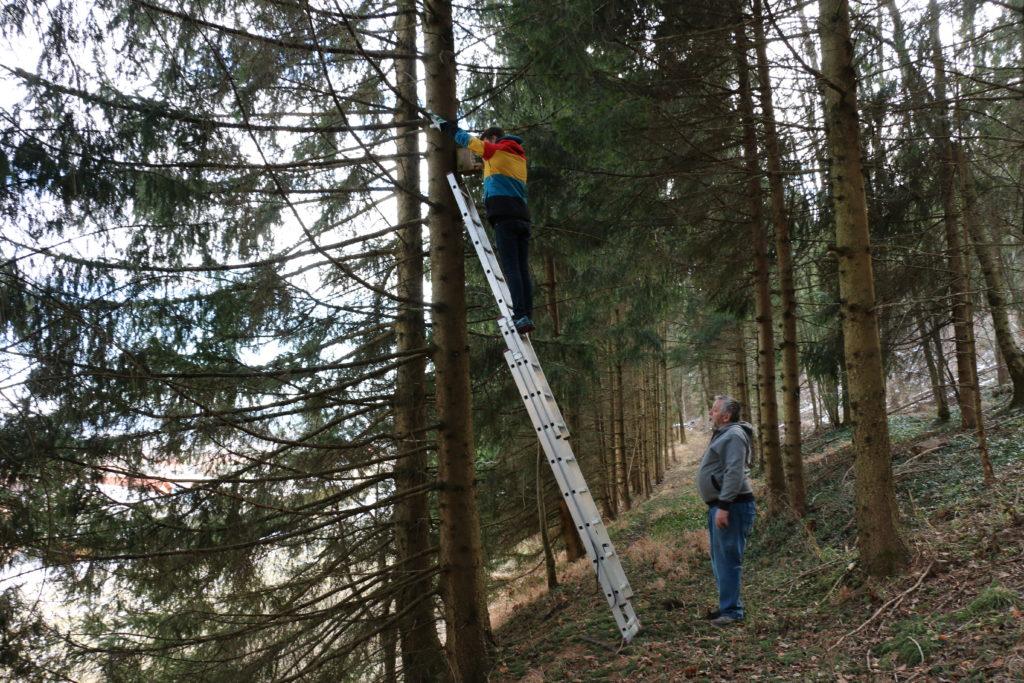 Anbringung bzw. Putz von Nistkästen - Foto: Annika Wascher