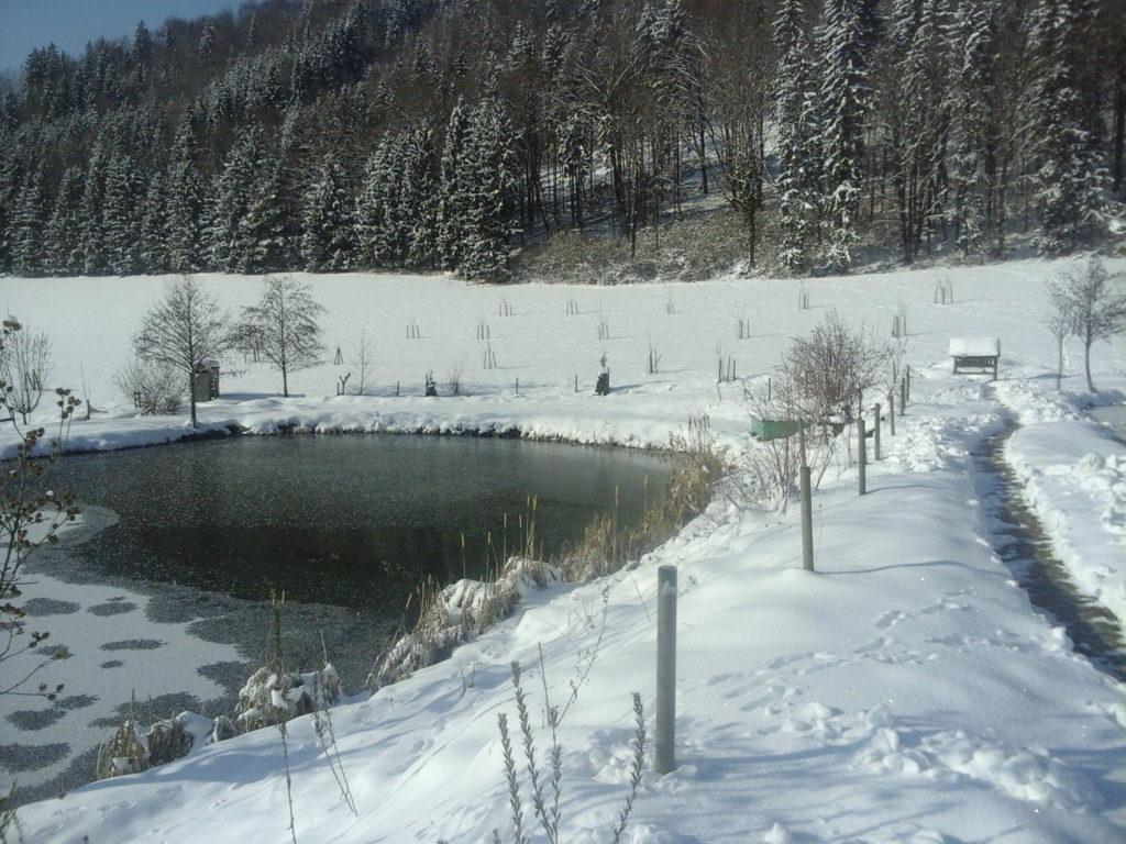Winterlandschaft Teichanlage - Weg zur Fütterung - Foto: Alois Wascher