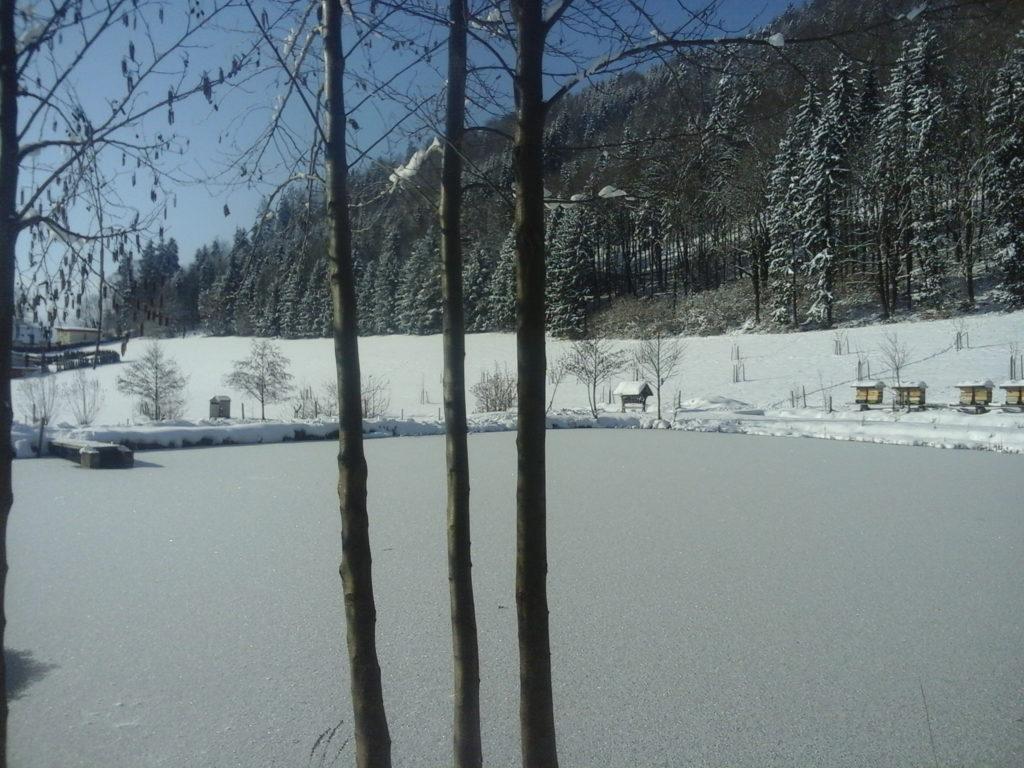 Sibirische Kälte zaubert Winterlandschaft um die Teichanlage - Foto: Alois Wascher