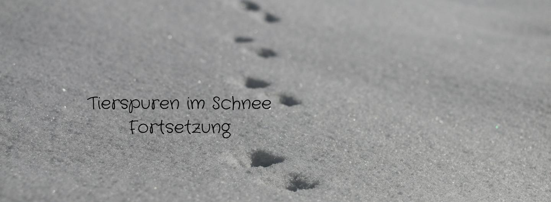 Tierspuren im Schnee - Foto: Annika Wascher