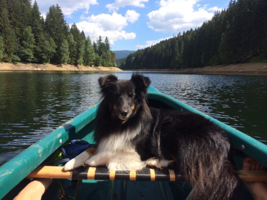 Cora am Wasser - Foto: Annika Wascher