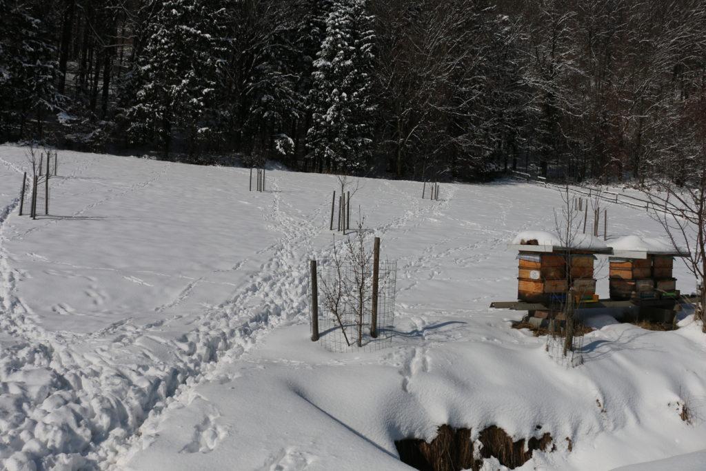 Weg über die Streuobstwiese - Foto: Annika Wascher