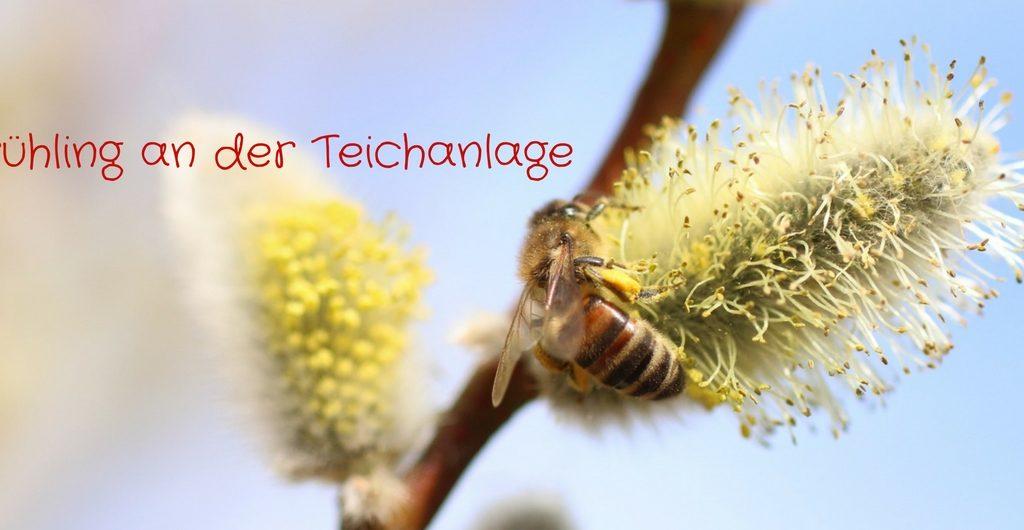 Frühling an der Teichanlage - Foto: Annika Wascher