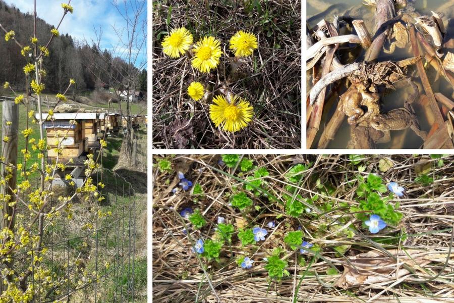 Frühling an der Teichanlage - Fotos: Irene Wascher