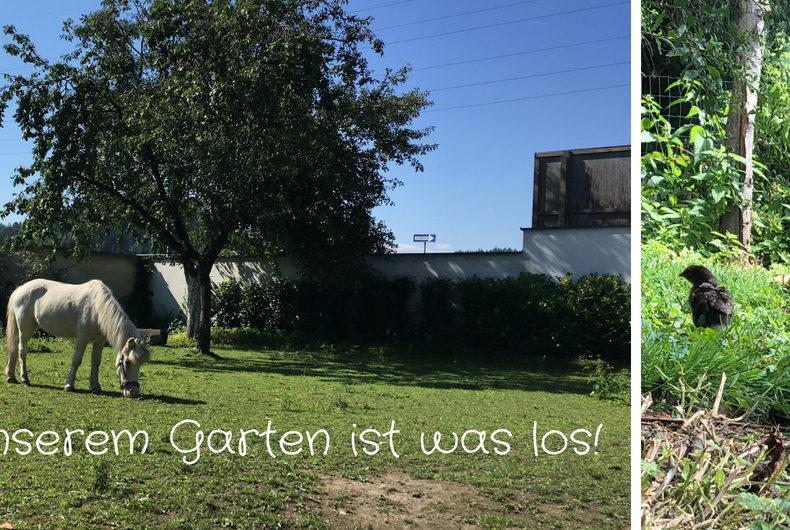 In unserem Garten ist was los! - Tier im Garten - Ponystute Fanny und Henne mit Nachwuchs