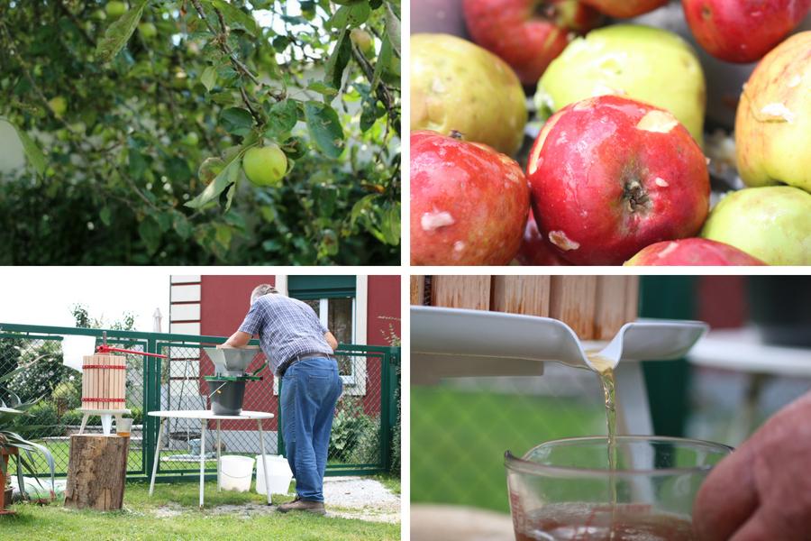 Äpfel - Fallobst  - Saftpresse - Fotos: Annika Wascher