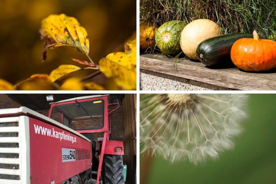 Herbst Stimmung bei Ferienwohnungen Familie Wascher - Karpfenking - Fotos: Burchhart