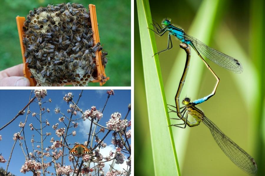 Lebensraum Teichanlage - Tipps für Dein gutes Insektenfoto - Fotos: Familie Wascher