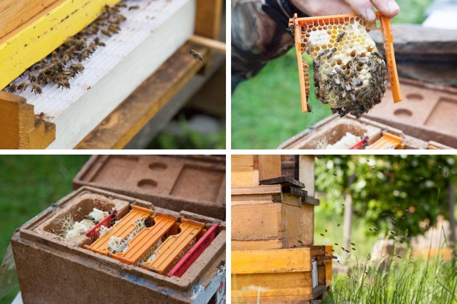 Bienen beim Anflug bzw. Ausflug zum Bienenstock oder im Bienenstock - Fotos: Pia Burchhart
