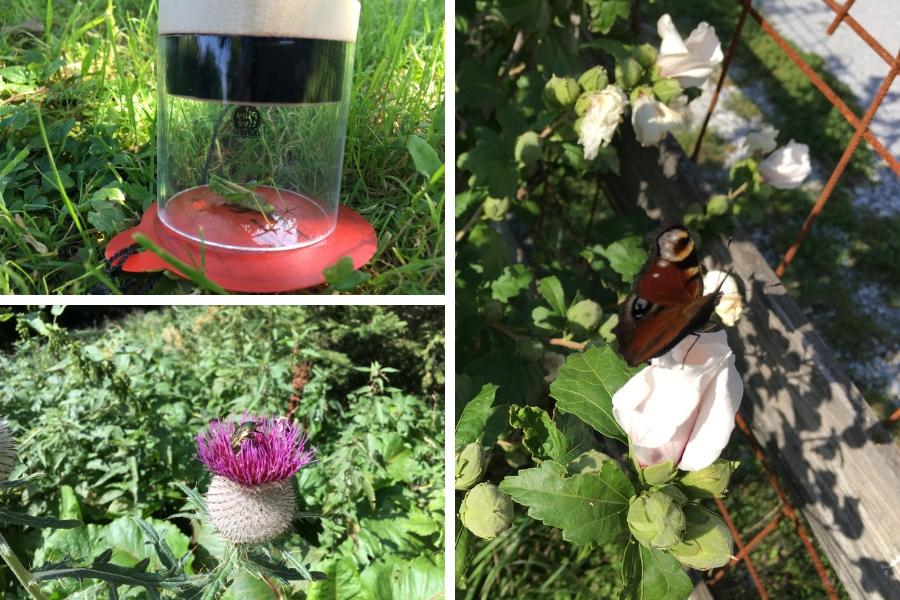 Heuschreck - Käfer - Schmetterling alle mit Handykamera abgelichtet und festgehalten - Fotos: Pia Burchhart