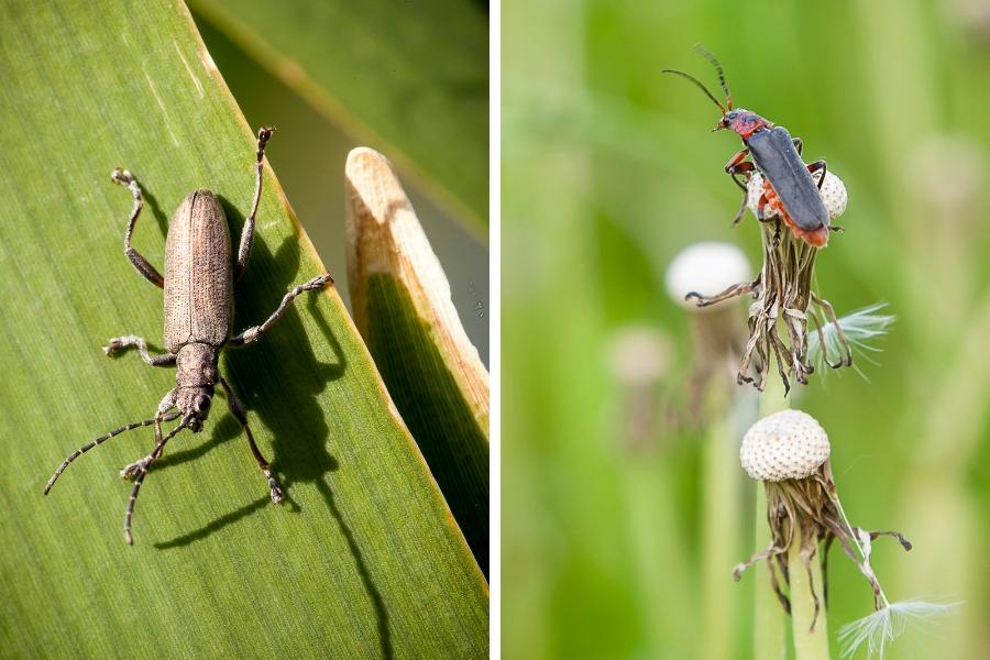 Käfer im Fokus - Fotos: Thomas Burchhart