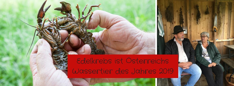 Edelkrebs - Österreichs Wassertier 2019
