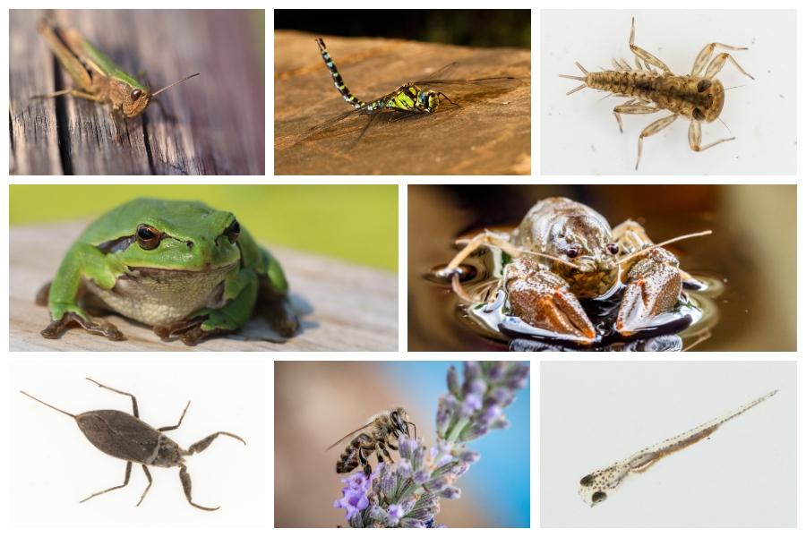 Diese und weitere Tiere erwarten Dich bei unserem Naturerlebnis an der Teichanlage