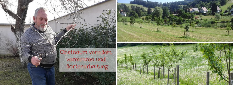 Obstbaum veredeln, vermehren und Sortenerhaltung