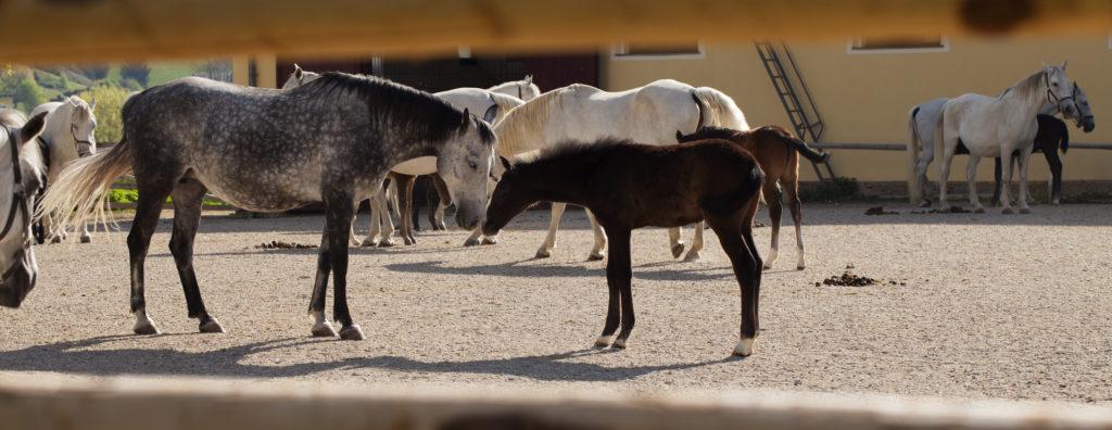 Morgengeflüster bei Mutterstute mit Fohlen
