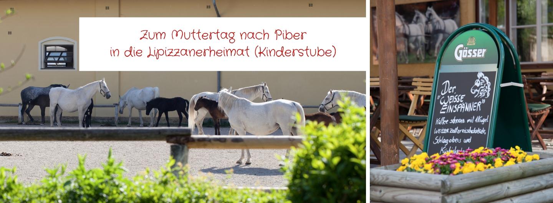 Zum Muttertag nach Piber in die Lipizzanerheimat (Kinderstube)