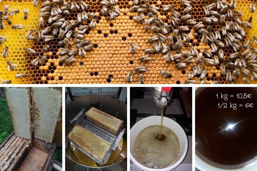 Honigernte 1kg Honig = 10,5€, 500g Honig = 6€