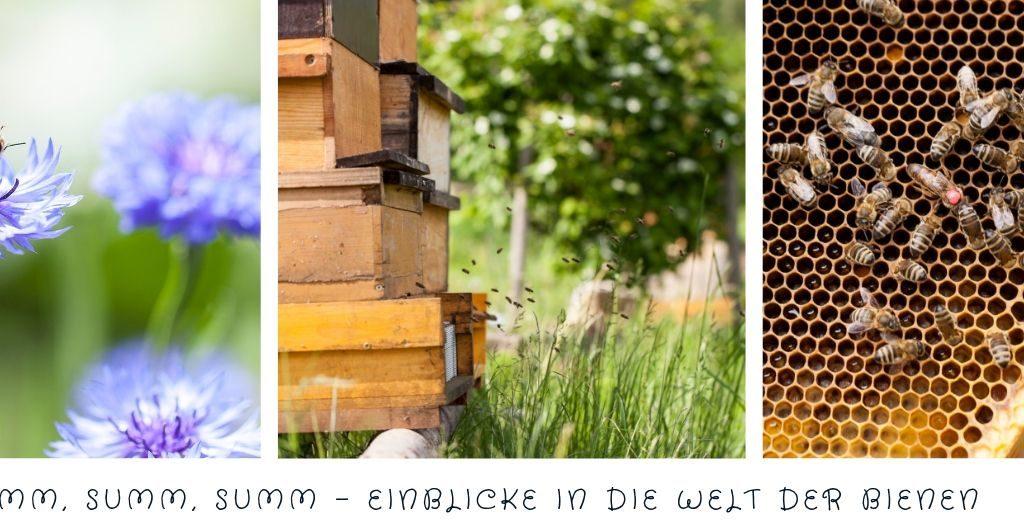 Summ, summ, summ, Einblicke in die Welt der Bienen