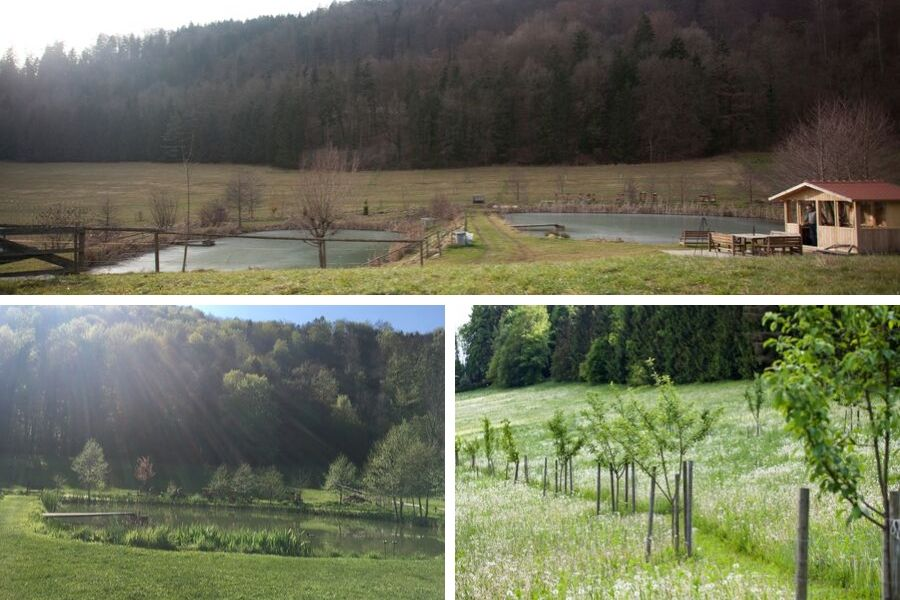Teichanlage und Streuobstwiese im Lauf der Jahreszeiten