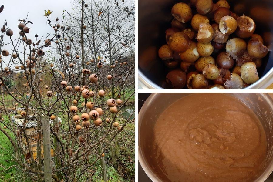 Mispel Marmelade - vom Baum (links) ins Glas