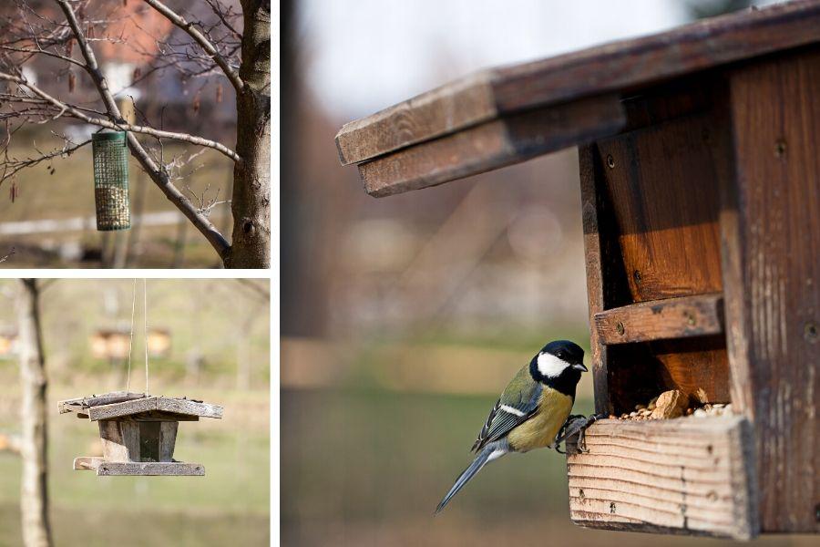 Vogelfütterungen