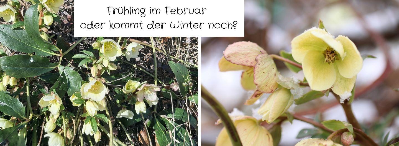 Frühling im Februar oder kommt der Winter noch?