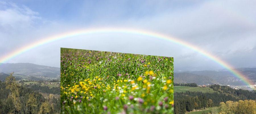 Vielfältig wie unsere Streuobstwiese und Bunt wie ein Regenbogen