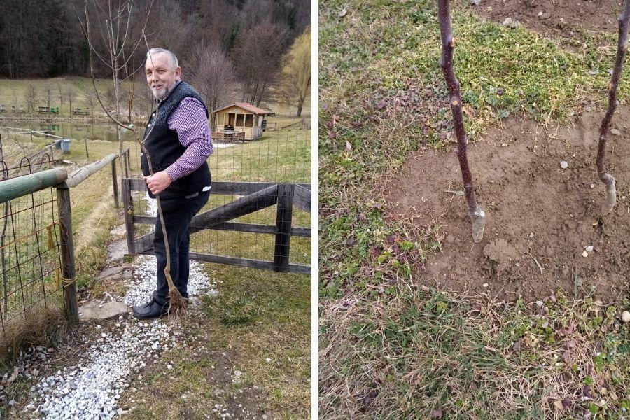 links trägt Luis Beutegut (oder einfach einen neuen Baum) zu seiner Streuobstwiese - rechts ist eine Herbstveredelung am Boden zu sehen